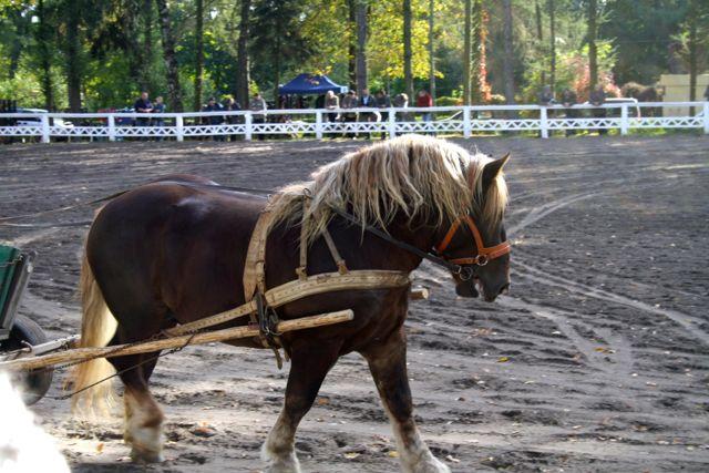 konie_18