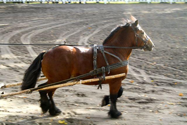konie_19