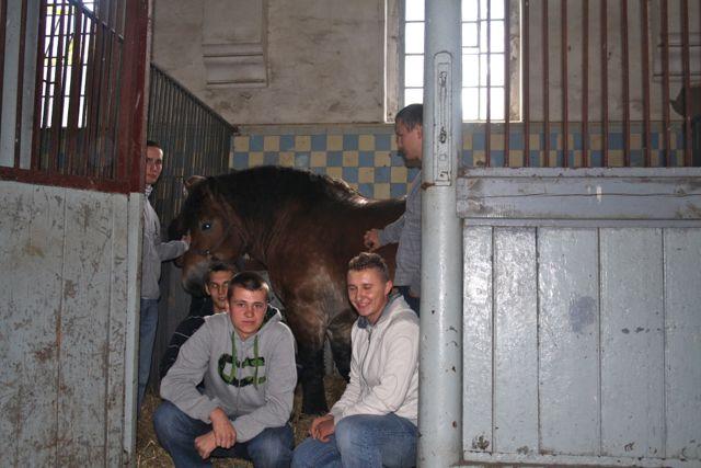 konie_20
