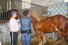 konie2011