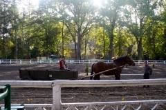konie_02