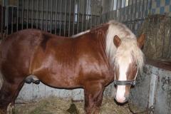 konie_11