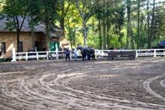 konie_14