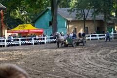 konie_15