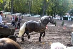 konie_16