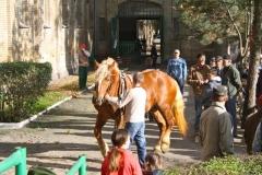 konie_17