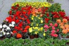 kwiaty2012_22