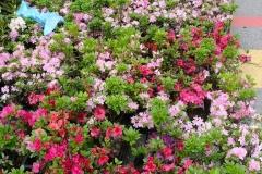 kwiaty2012_30