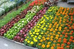 kwiaty2012_31
