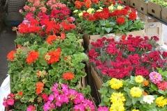 kwiaty2012_32