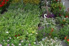 kwiaty2012_33