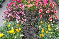 kwiaty2012_34