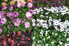 kwiaty2012_35