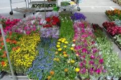 kwiaty2012_37