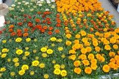 kwiaty2012_40