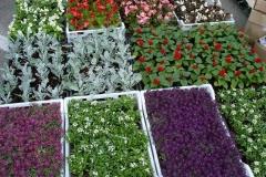 kwiaty2012_41