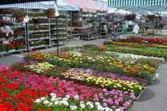 kwiaty2012_50